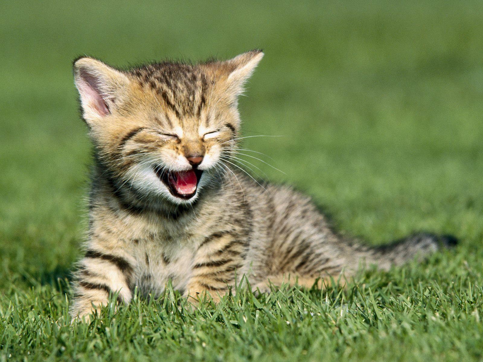 Tom le chat gratuit pour tablette