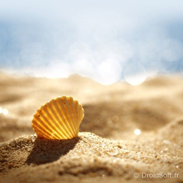 Coquillage wallpaper ios android fond ecran