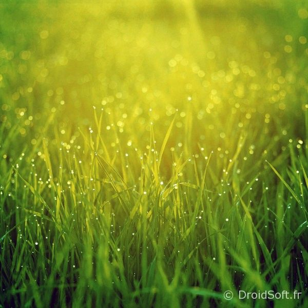 herbe fraiche wallpaper android hd