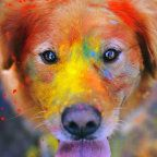 wallpaper hd retina chats chiens android smartphone 1