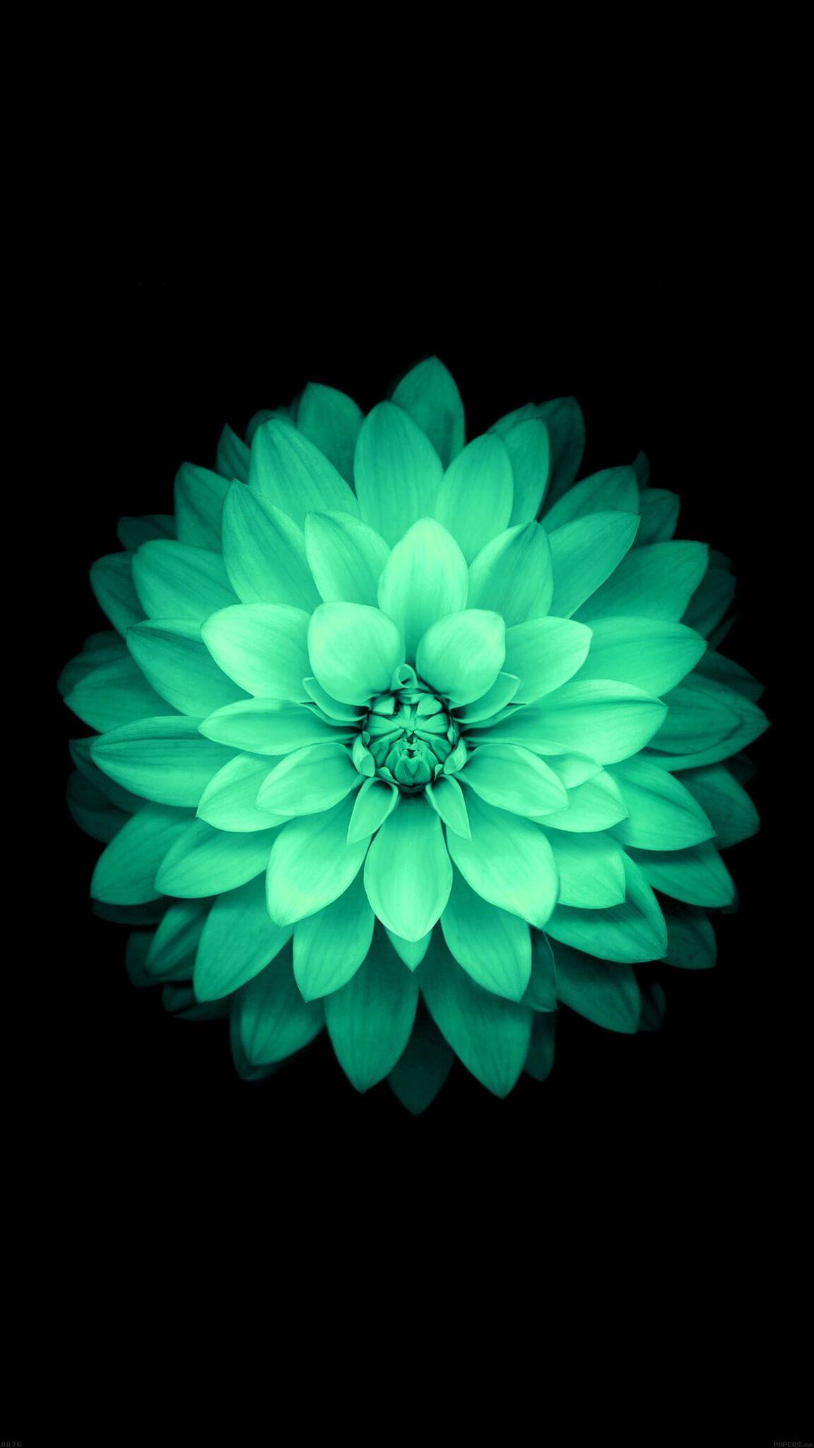 Fleur D Apple Fond D Ecran Android