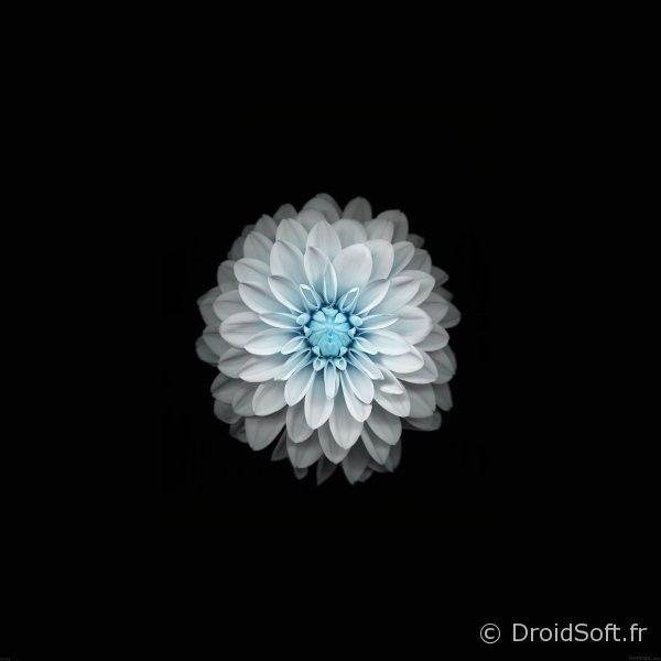 fond-ecran-tablette-blanc