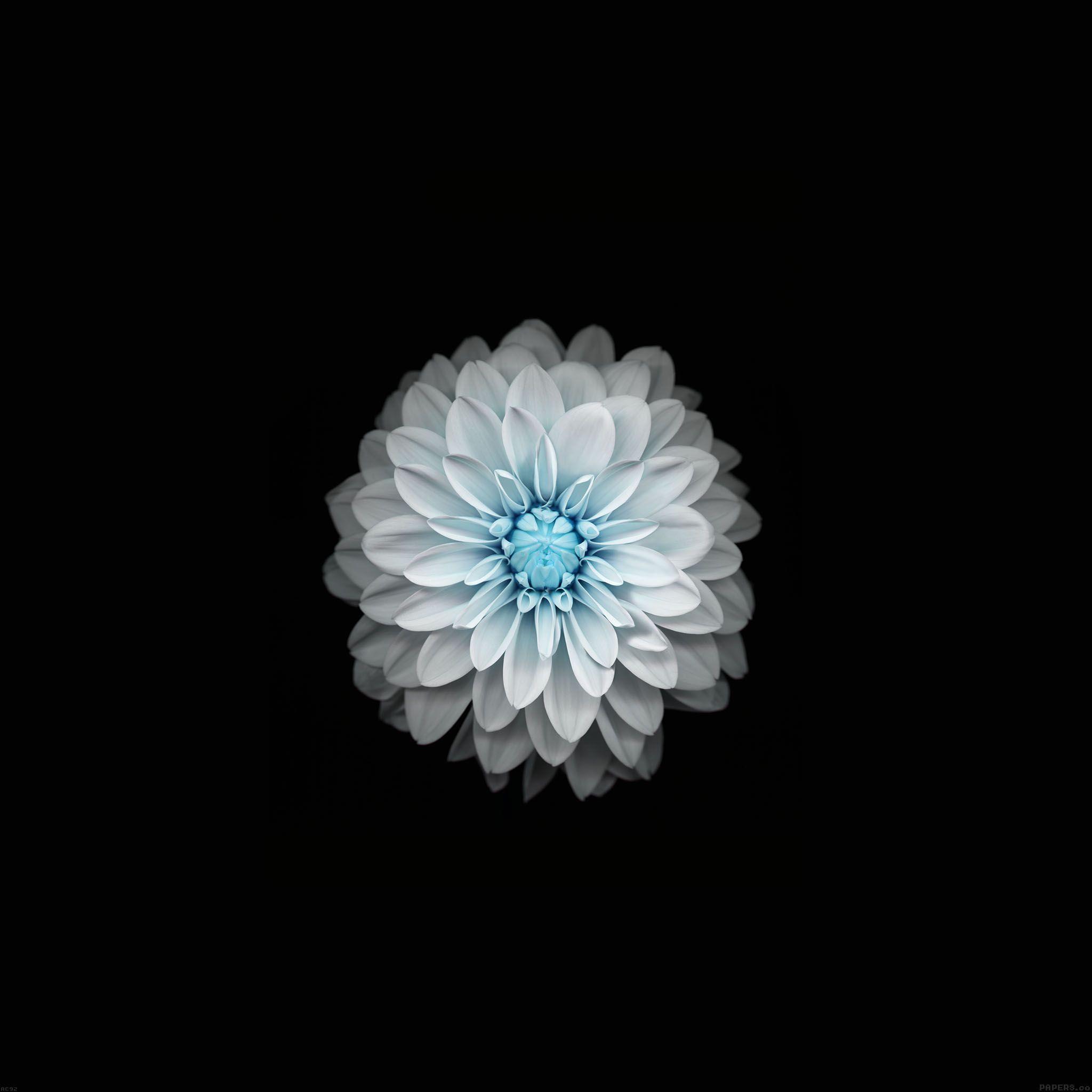 Fleur Blanche Fond D Ecran Android Hd Droidsoft