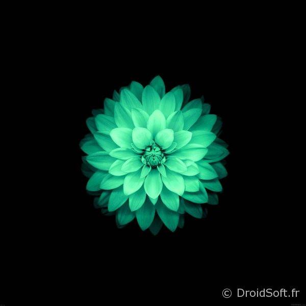 fond-ecran-tablette-vert