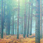 , Les fonds d'écrans du jour : La Forêt