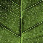 , Les fonds d'écrans du jour : Petits zoom sur notre nature….