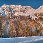 snow_trees_mountains_forest_winter_90819_2048x2048