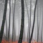 , Les fonds d'écrans du jour : paysages (partie 1)