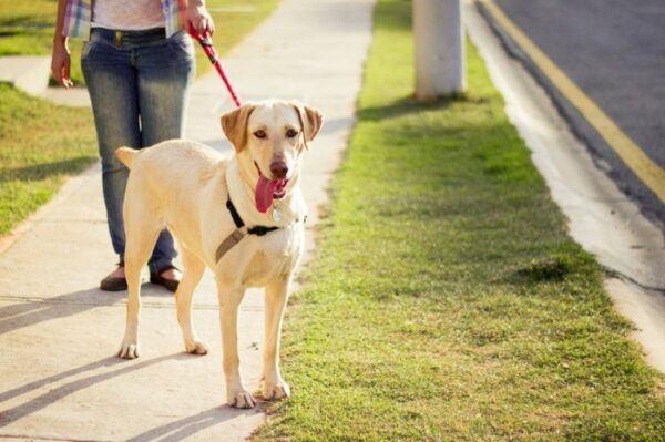 woog, «Woog» ou comment bien promener son chien