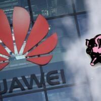 Huawei ses ventes s'effondrent : l'élevage des porcs et le charbon comme solution